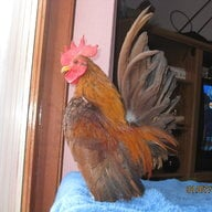 Chickenaddict