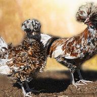 Birds & Eggs