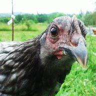 chickenjane82