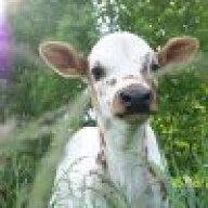 Longhorns&Chickens
