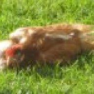 ChickenGirl165