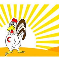 chuckeychickens
