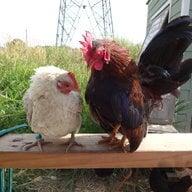 ChickenMack