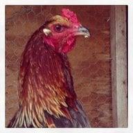 chicklove93