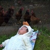 WestCoast Hen