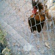 farm.bird01