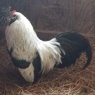 ChickenLeg