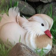 DuckLover3