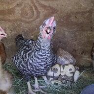 mamas farm
