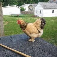 ChickNhood