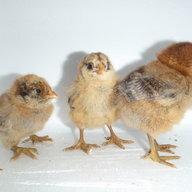 chickgonecrazzy
