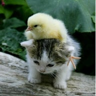 Cheeky Chick