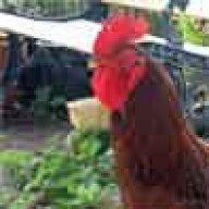 ChickenPalace