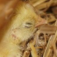 Chickmama74