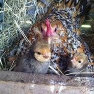 ChickenAndMore