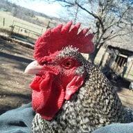 ChickenFootRnch