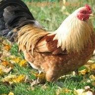 ChickNmamma