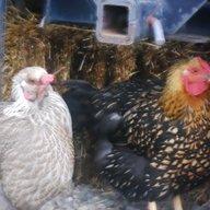 Chickenpuff
