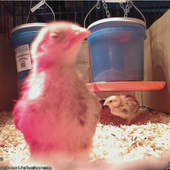 CluckerCam