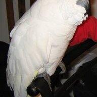 ParrotLover