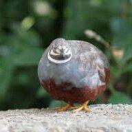 walkingbird