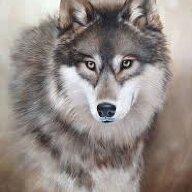 wolfgirl9