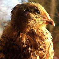 quailmart