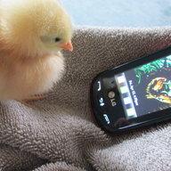 chicks4darlin