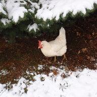 chicks-R-me