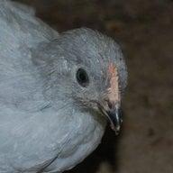 ChickChic1403