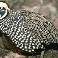 bobsbirds