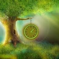 treelover247