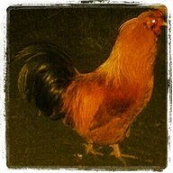 ChickenGma