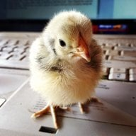 ChickenJunk