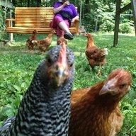 chickenpattie