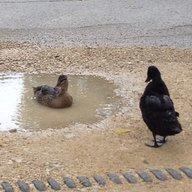duckydanna