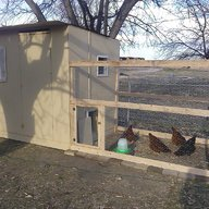 ChickenMamaNE