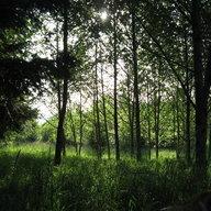 Treesongs