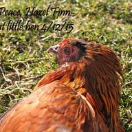 chickencrazy429