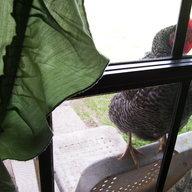 Ida Chicken