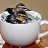 Duckies34