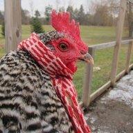Chickenlinda76