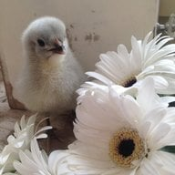 Chick N Mama