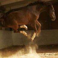 horsedirt