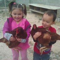 GT Farm