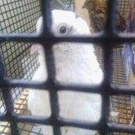 LittleBeepo1
