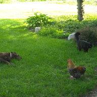 Hoppys hens