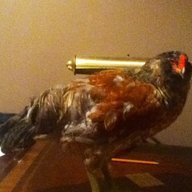 chickenpal147