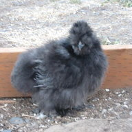 chicksnbuns