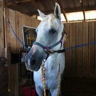 horseygal2013